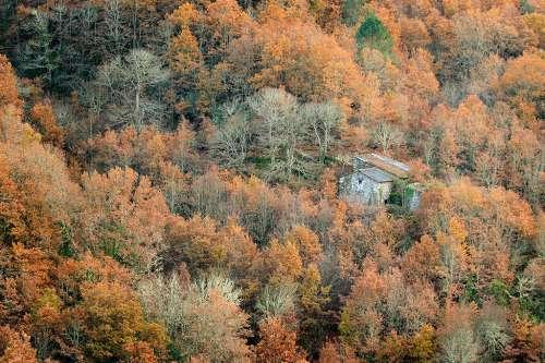Otra del otoño