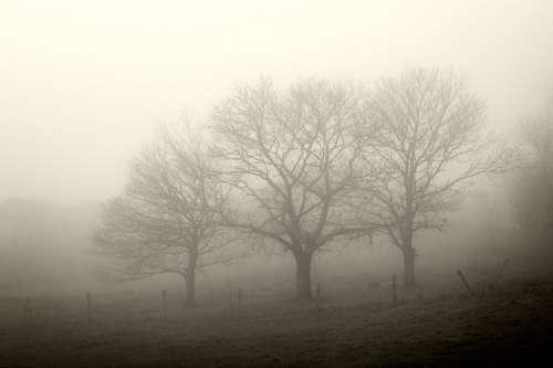 Arboles en la niebla