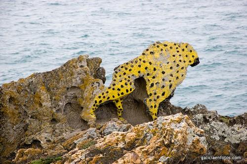 Leopardo en la roca II