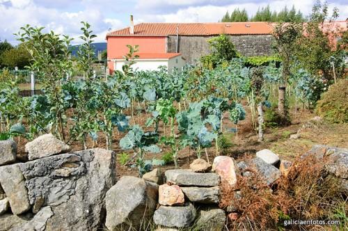 Legumbre for Como quitar la mala hierba del jardin