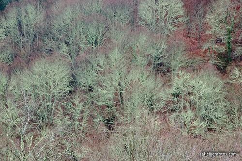 Bosques en Lugo