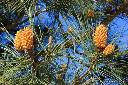 Cargaditos de polen