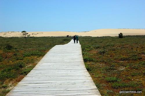 Pasarela a las dunas