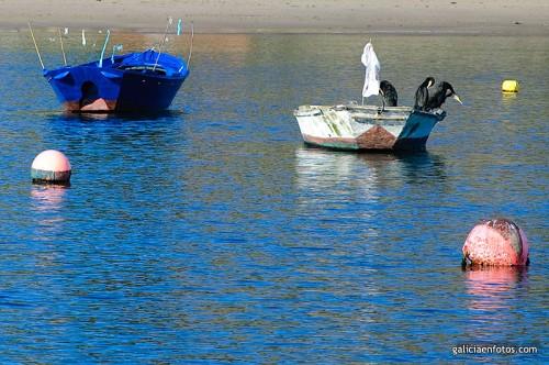 Cormoranes en la barca