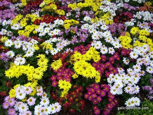 Flores de Tenerife