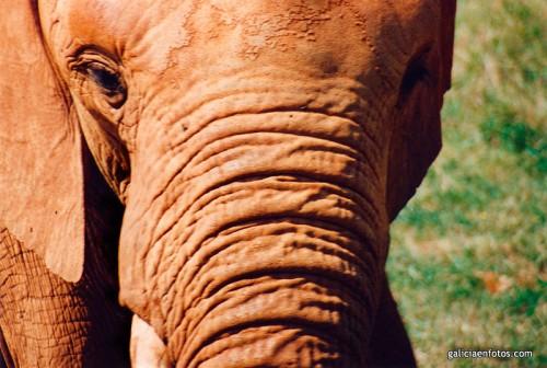 Elefante en Cabárceno
