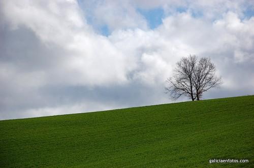 Ladera con árbol