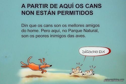 Perros no permitidos